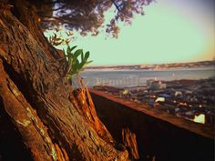 painting tree branch growing over city by snakegi at PhotoBtc.com