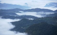 Witness spectacular views of the #hills at #WindermereEstate #Munnar while the clouds engulf you in serene mists! #Kerala #RareIndia  #Explore More: - http://bit.ly/1opB5Qj