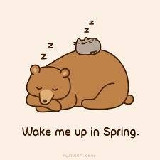 Image result for sleeping bear drawings