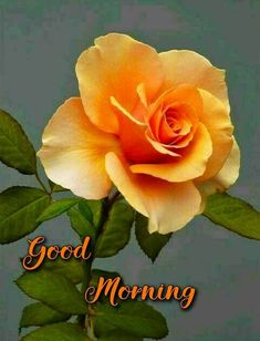 Good Morning Friends Images, Good Morning Flowers Pictures, New Good Night Images, Good Morning Beautiful Flowers, Good Morning Roses, Good Morning Picture, Morning Pictures, Gud Morning Wishes, Good Morning Wednesday
