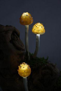hongos bio luminescentes Mycena, estos solo se dan en las selvas vírgenes del Pacífico, Indico, Japón y Brasil