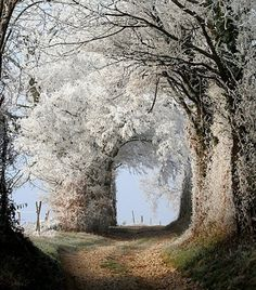 white flowers, nature, arch, pathway, tree
