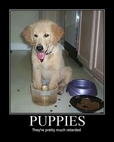 Not  just puppies, the big ones are too!