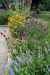 Echinacea de zonnehoed is niet altijd rood GroenVandaag Outdoor Plants, Outdoor Gardens, Cottage Garden Design, Gravel Garden, Garden Borders, Flower Bed Borders, Plantation, Back Gardens, Dream Garden
