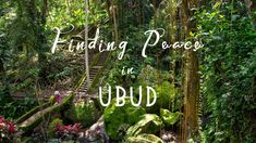 Share this post: Finding Peace in Ubud: A Quick Guide to Bali's Culture Capital