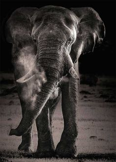 15 beautiful and majestic photos of elephants - Blog of Francesco Mugnai