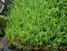 WF-W11000 #LandscapeGrass  #ArtificialLandscapeLawn