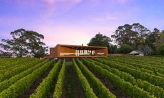 The wood-lined terrace walls of this Australian house angle outwards to provide a shady spot for its owners to take in views of their vineyard
