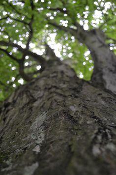 Oak I seem to remember.