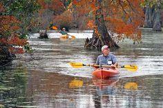 North Carolina - Merchants Millpond State Park - Kayaking