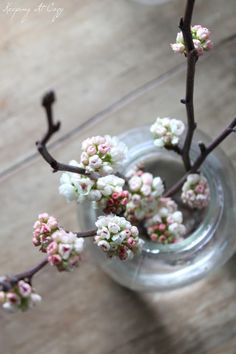 Spring - Blossom - with a little fresh water, the buds bloom practically overnight and stay beautiful for at least a week.