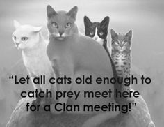 """Let all cats old enough to catch their own prey gather here for a Clan meeting!"" - Bluestar"
