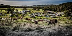 Is New Zealand's Dairy Industry destined for the scrap heap?