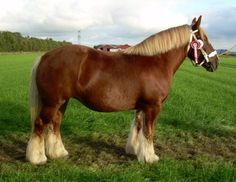 The Jutland horse (Danish: Den jyske hest) is a draft horse breed originating in Denmark, named after the Jutland Peninsula which forms the western part of the country. Usually chestnut, they are a compact, muscular breed known for their calm and willing temperament.