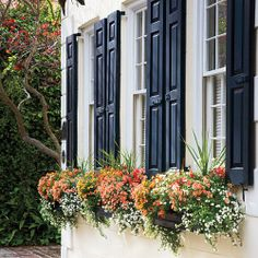Window Box Planters - Southern Living white bacopa, yellow millionbells, coral twinspur, and orange shapdragons Charleston Style, Window Box Flowers, Black Shutters, Exterior Shutters, Shutters Inside, Window Planter Boxes, Planter Ideas, Garden Windows, Handmade Home