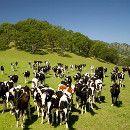 Disminuir el consumo de carne ayudaría a reducir la contaminación