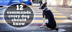Does your pooch come when you call? Having an obedient pooch isn't about tricks; it's about knowing how he'll respond in an emergency situation or when he's near a busy street. #dogs #pets