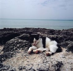 cat and the sea.