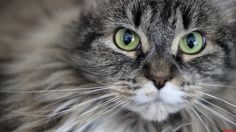 My green eyed baby - http://cutecatshq.com/cats/my-green-eyed-baby/