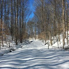 The farm driveway 8 days post blizzard: untouched and picture perfect. by stumpfarmhouse