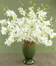 August Flower: white dendrobium orchids