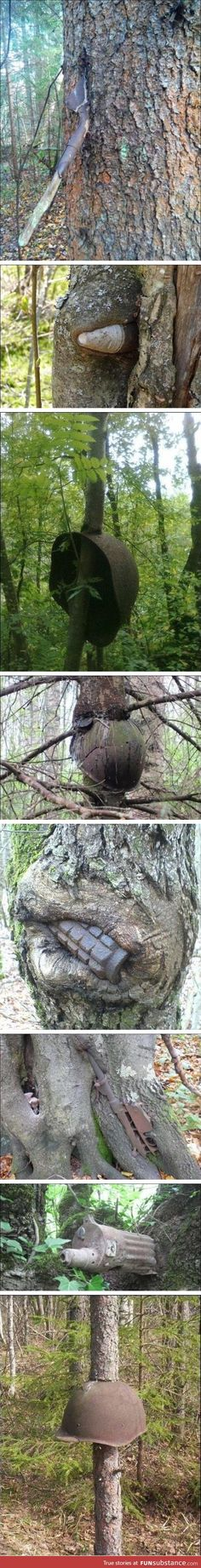Trees that grew in a warzone
