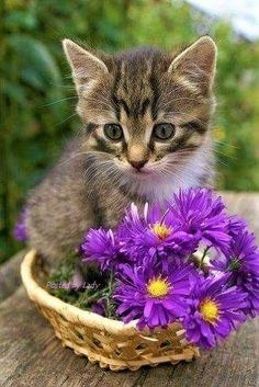 Cute kittens and purple flowers . What could be better