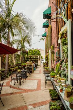 "Succulent Cafe | Oceanside, California • ""Its courtyard is a succulent fantasy land, featuring a delightful array of plants everywhere you look, all growing in unique containers, from old tennis shoes to hanging lanterns."""
