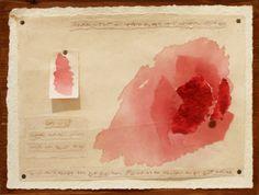 Rosa Rosae rossa 2009