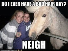 Funny Pun: Horse, Do I Ever Have a Bad Hair Day? Neigh