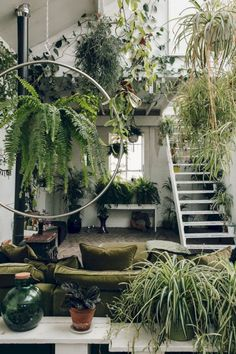 16 The Best Design Of Ornamental Plants At Home