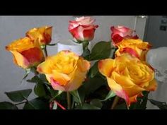 Youtube, Birthdays, Make It Yourself, Rose, Flowers, Anniversaries, Pink, Birthday, Roses