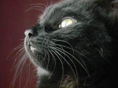 Kitty Pepper!!