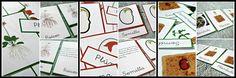Free nomenclature cards montessori planta y semilla