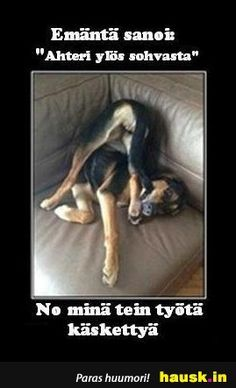 Haha Funny, Funny Memes, Lol, Story Quotes, Mood Quotes, Animal Humour, True Stories, Finland, Dog Lovers