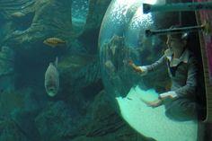 @Cretaquarium #cretaquarium Ενυδρείο Κρήτης - Θαλασσόκοσμος: ενυδρείο γούρνες, χερσόνησος ενυδρείο, κρήτη θαλασσόκοσμος, σημείο ενδιαφέροντος κρήτη, επίσκεψη ενυδρείο, ελκεθέ κρήτη