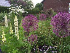 Sunnys Haus: Margeriten und Rosen - der Garten im Juni
