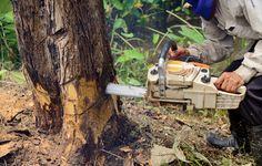 Hire Efficient Arborists for Safest Service #Arborists #Brisbane