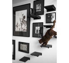 Nesta morada, o truque foi pintar os acessórios para os gatos da mesma cor dos quadros, criando uma integração entre os dois