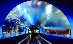 Don't miss the opportunity to say hello to the various aquatic life-forms under Shenzhen.