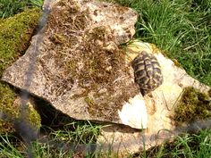 Baby Herman's tortoise