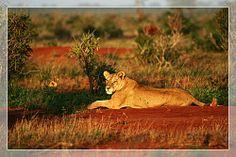 Tsavo National Park..Blaze Safaris & Tours Via I-Ads