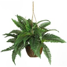 Nearly Natural Boston Fern Silk Hanging Basket ($45) ❤ liked on Polyvore featuring home, home decor, floral decor, plants, fillers, flowers, floral, green, nearly natural and green basket