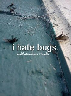 I have the biggest, most death-defying, uncontrollable fear of bugs! I am absolutely petrified!!