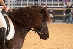 Hucul by CalyHoney on DeviantArt Horse Breeds, Around The Worlds, Creatures, Horses, Deviantart, Animals, Animales, Animaux, Animal