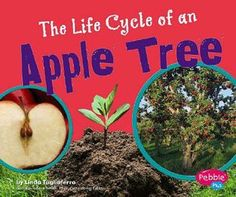 Apple are a great theme for the fall. This is a fun and easy to do Apple and book learning for kids! We read The Life Cycle of an Apple Tree (Plant Life Cycles) by Tagliaferro and Linda. Tree Life Cycle, Cycle For Kids, Apple Plant, Apple School, Christmas Tree Photography, Apple Unit, Apple Activities, Apple Theme, Kindergarten Lessons