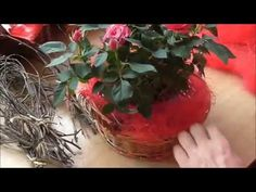 Jana Melas Pullmannová: Valentínska ikebana Ikebana, Youtube, Plants, Flora, Plant, Floral Arrangement, Youtube Movies, Planting