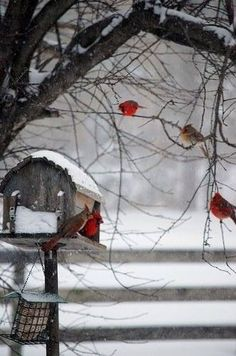 Birds in a winter wonderland