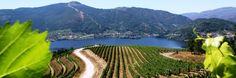 La Comisión Europea reconoce el riesgo de sobreproducción si se liberaliza el viñedo http://www.vinetur.com/2013021111489/la-comision-europea-reconoce-el-riesgo-de-sobreproduccion-si-se-liberaliza-el-vinedo.html