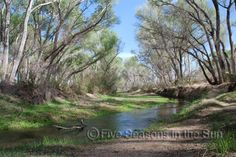 San Pedro River Riparian National Conservation Area